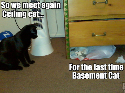 ceiling cat and basement cat showdown flickr photo