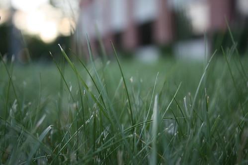 summer green grass unedited banburryplace