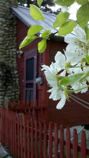 Cabin May 2011-3