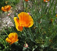 California in spring