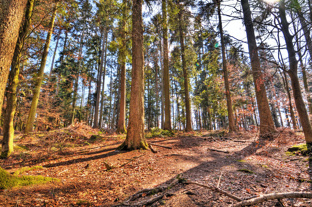HDR Forest