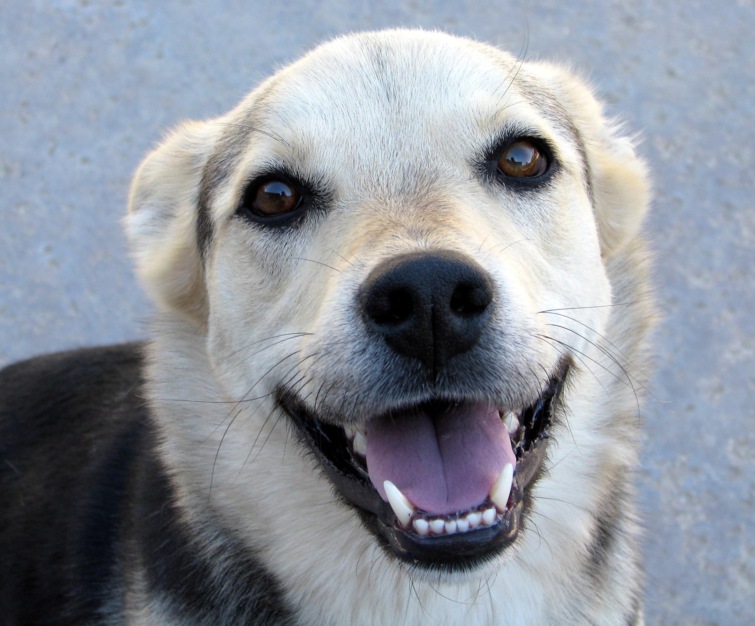 smiling dog flickr photo sharing