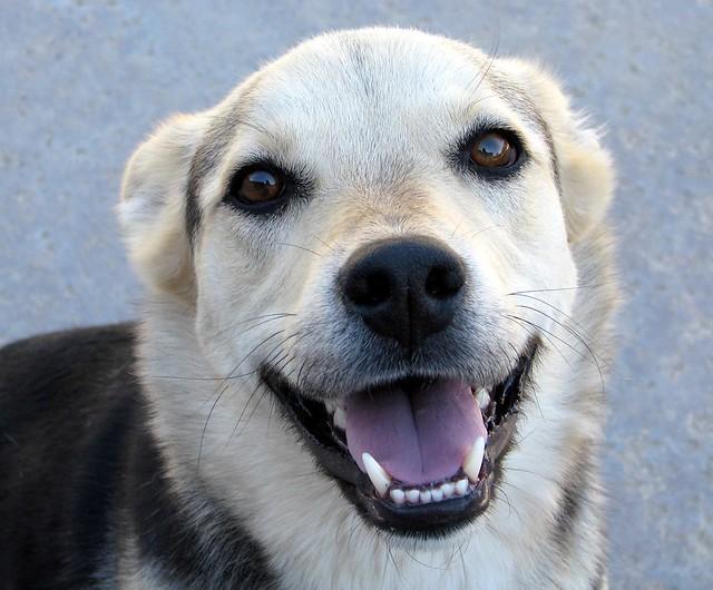 Happy Days Dog Care Martlesham