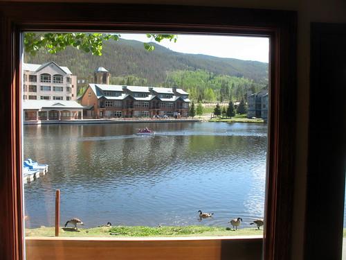 geese colorado keystone paddleboat