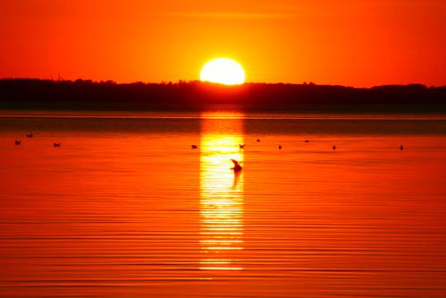 ocean sunset sea summer sun water denmark sommer reflexions solnedgang uldbjerg