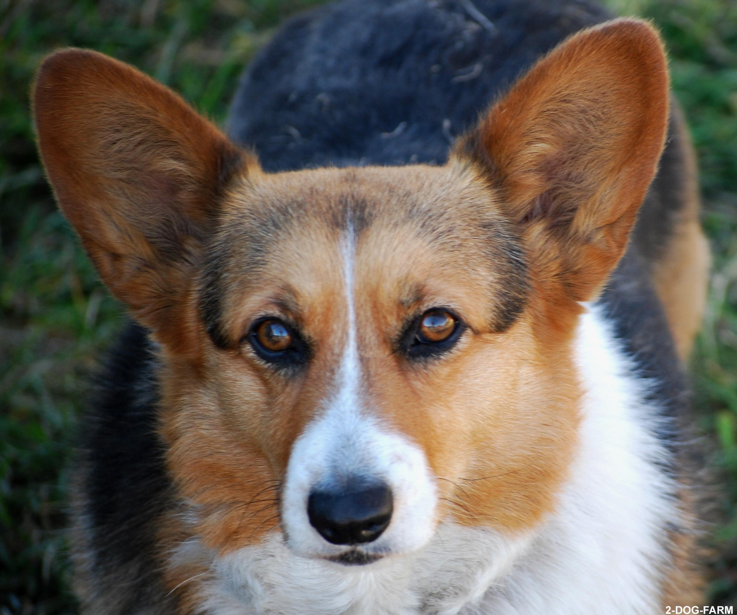 Johnson City Dog Park Membership