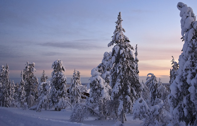 Lappland-8769