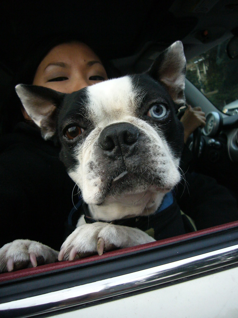 BOOGS IN THE CAR