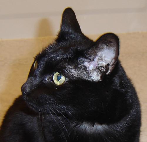 POD 12/365/2009 - Spidercat