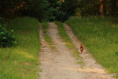 Verrast door een jong vosje