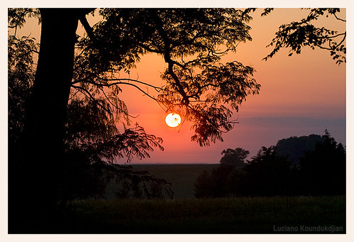 tree nature rural sunrise country campo entrerios