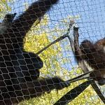 Los Angeles Zoo 077