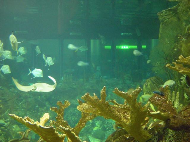 Caribbean Reef 3 Shedd Aquarium Chicago Flickr Photo