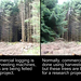 3D tree felling (crossview)