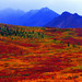 No photoshop simply Alaska Range& tundra! by Veronica Wipflinger