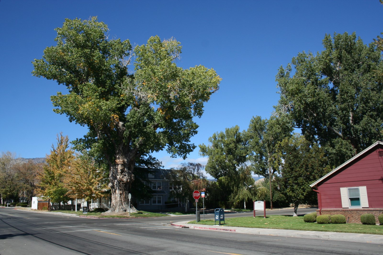 Nevada bicentennial tree around carson for Eagle valley motors carson city nv