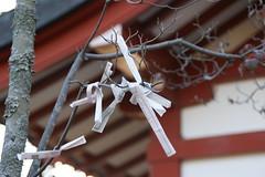 浅間神社お神籤