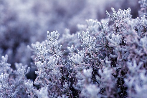 Ice nature