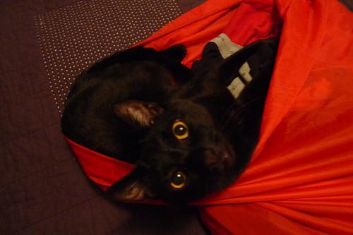 catbag (1 of 3)