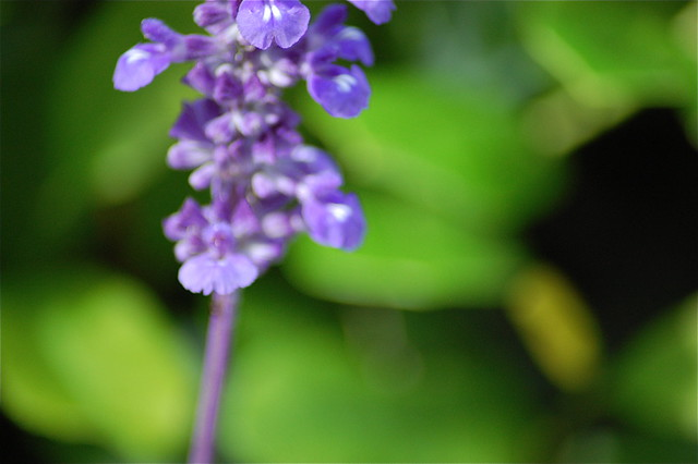 Header of lavendar