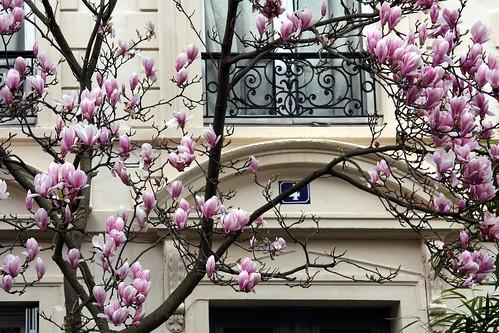 Magnolias 4 ever