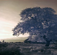 Mogshade Hill (infrared)