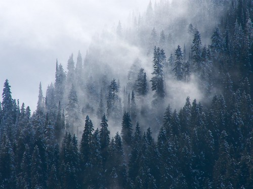 trees usa mist mountain snow mountains weather fog clouds washington nationalpark unitedstates dramatic surreal pines mountrainier mountrainiernationalpark cascades washingtonstate magical