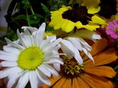 arrangement upclose
