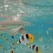 Bora Bora sharks & rays