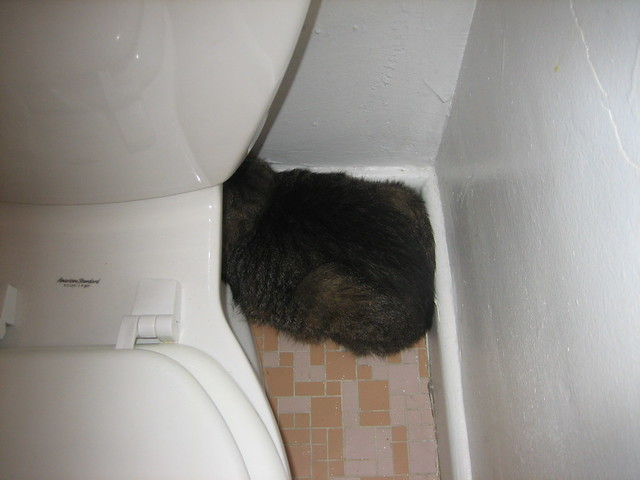 cat litter box petbarn
