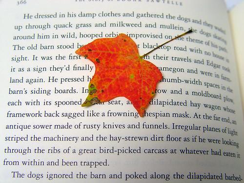 ahhh, autumn...