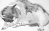 Pencil sketch of cat before painting