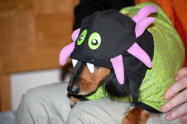 Funny Sweet Mini Long Haired Dachshund Puppy Halloween Costume