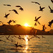 gulls into the sunset