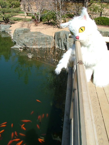 DPL Kitty at the Denver Botanic Gardens
