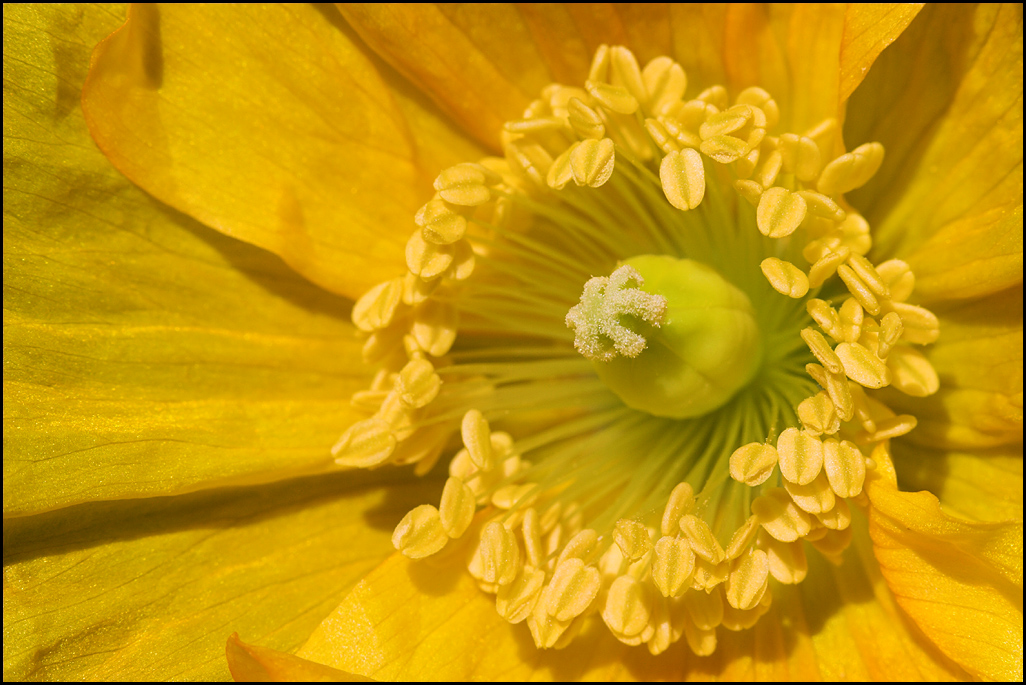 Poppy time #2