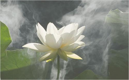 Nos amies les fleurs (Symbolisme) - Page 5 2611269220_20ae0ce9ca