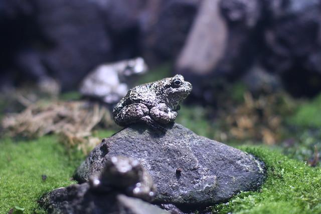 National Aquarium Frog Flickr - Photo Sharing!