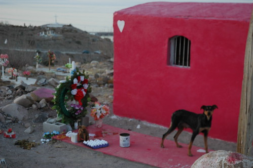 Lady Momma and Rose Alice Lane, starving in the cemetery when I first brought them food, twilight under a heart marked tomb, San Rosalia, Baja California Sur, Mexico by Wonderlane