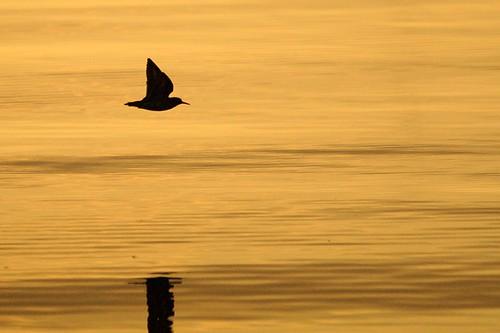 reflection nature water birds silhouette sunrise nps dcist sandpiper nationalparkservice potomacriver alexandriavirginia fairfaxcounty georgewashingtonmemorialparkway bellehavenmarina