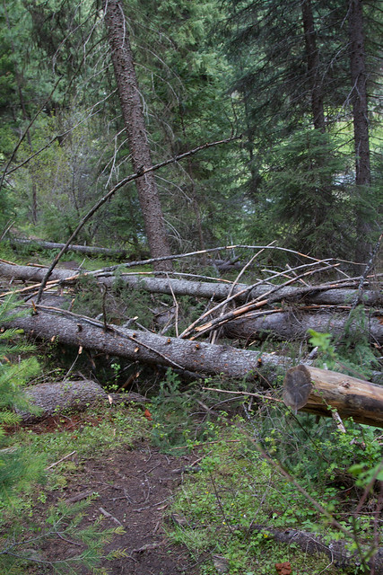 Tree pile on Davis Creek trail