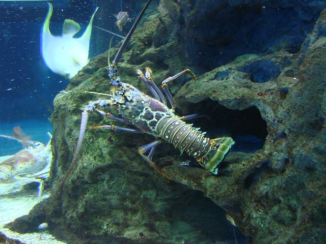 2008 03 16 Camden 025 New Jersey State Aquarium Explore