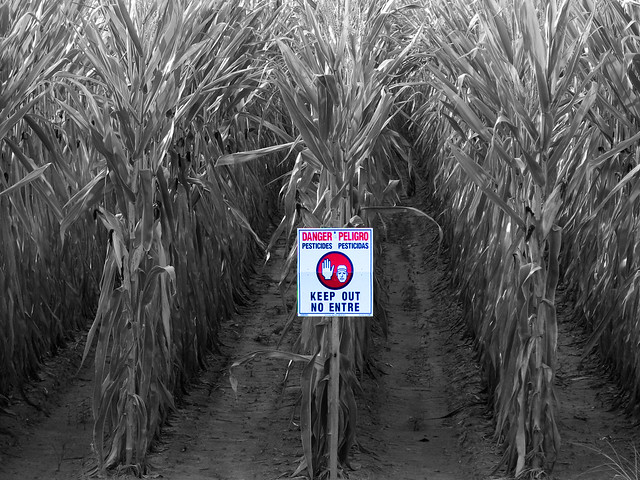 Danger in the Corn