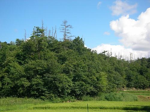 森林ノ工房(京丹後市) Shinrin-no-Kobo