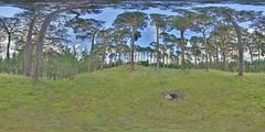 LochInsh: Pines Kincraig Scotland Equirectangular