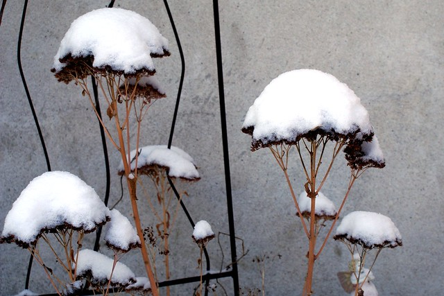 Snowy Tops