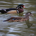 Woodduck Pair
