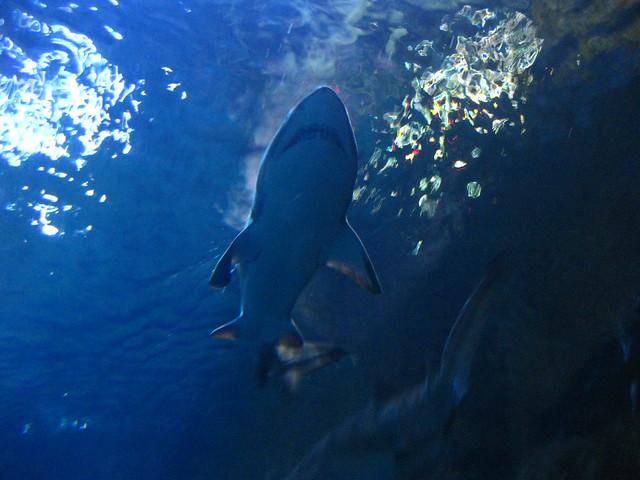 Camden Aquarium Shark Tank Flickr Photo Sharing