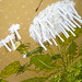 2008 | Weed Arrangement - Chutney Preserves 2