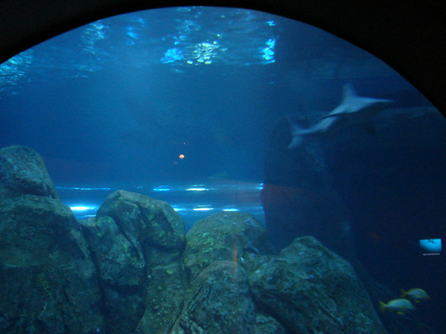 2008 03 16 Camden 018 New Jersey State Aquarium Flickr